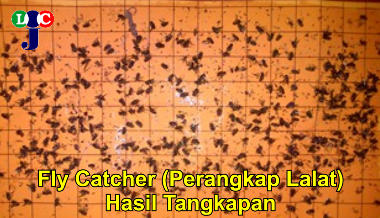 Fly Catcher - Hasil Tangkapan