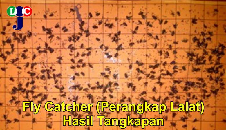 Fly Catcher - Hasil Tangkapan